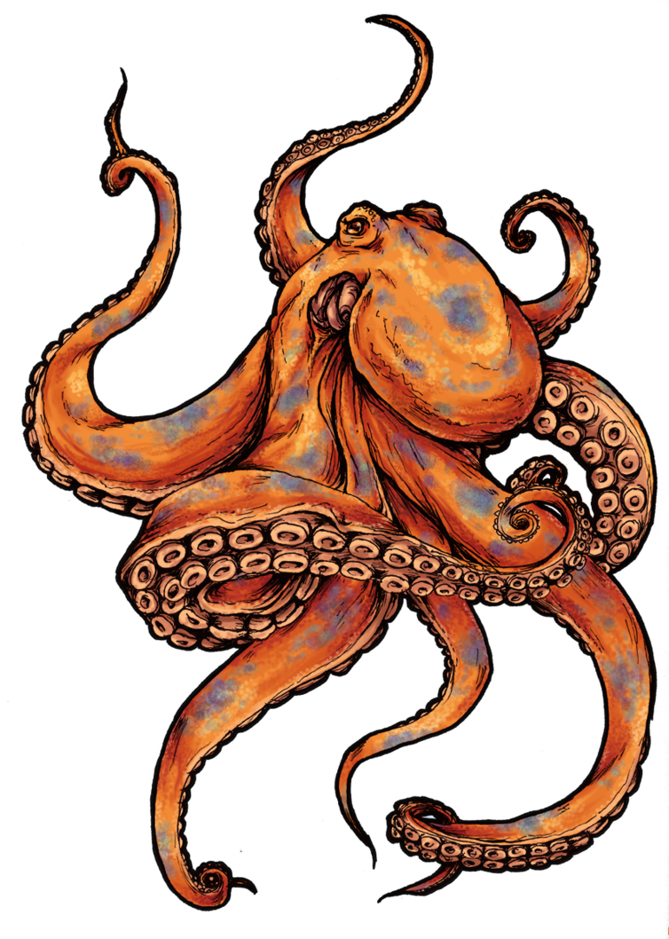 Scholarships drawing octopus. Tattoos designs and pictures