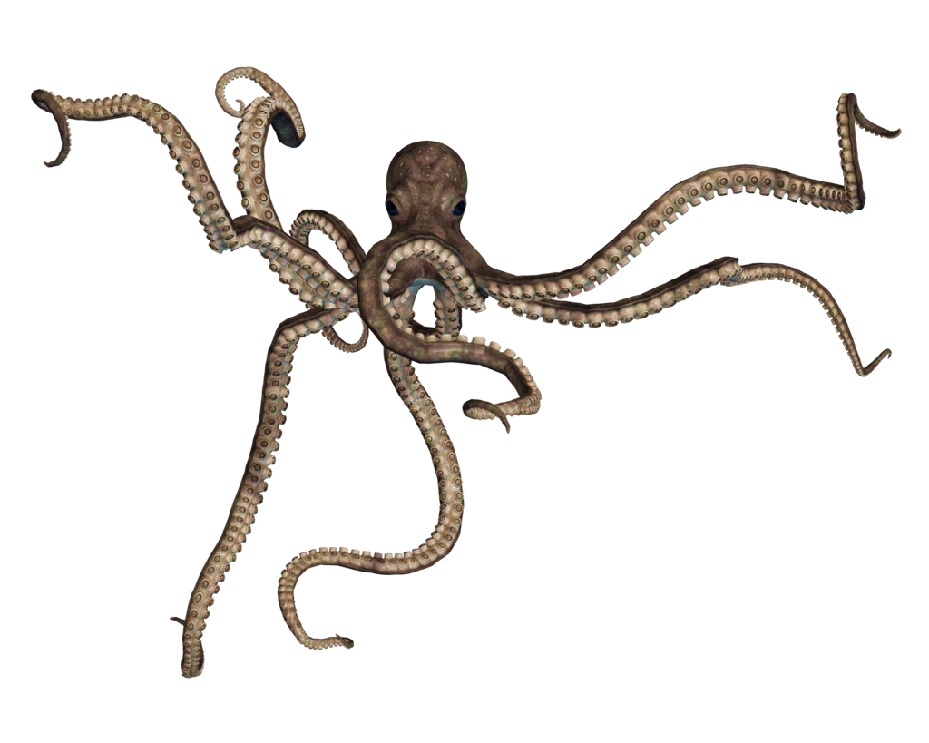 Octopus png. Images free download