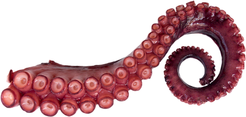 Octopus tentacles png. Largest collection of free