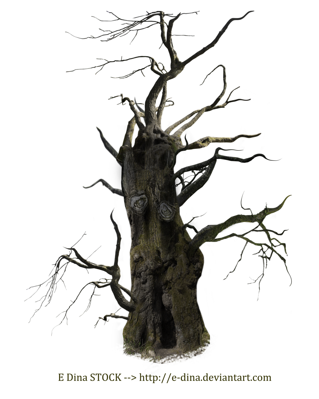 Old tree png. Free download arts