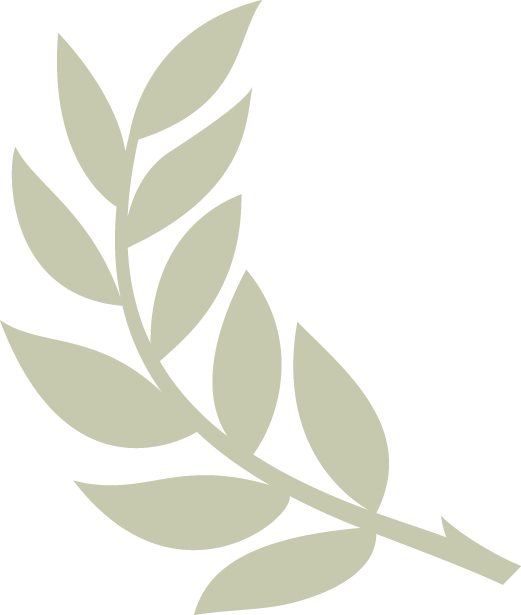 Olive branch png. Images in collection page