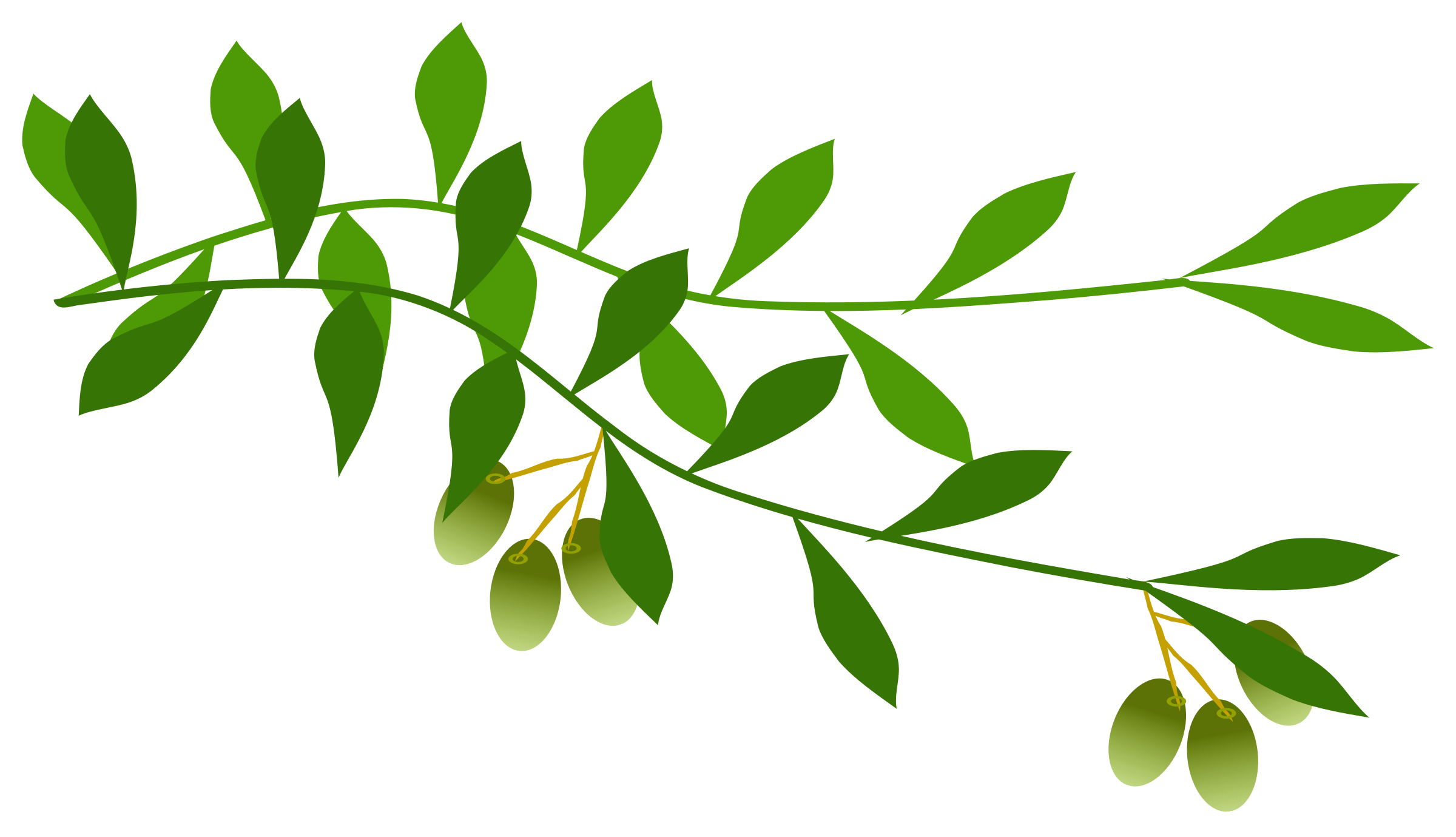 Olive branch png. Clipart big image