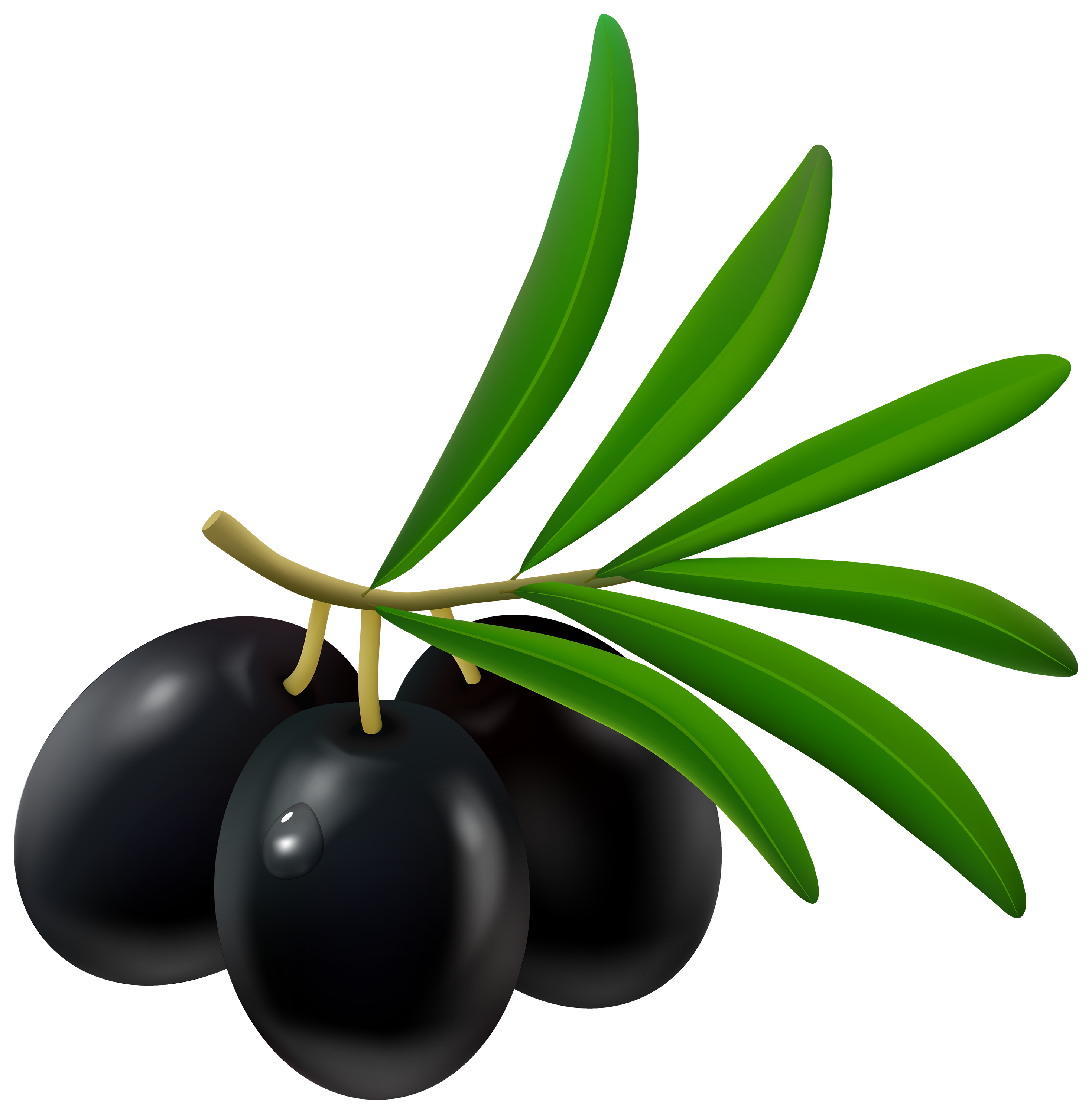 Black png best web. Olive clipart clip art freeuse library