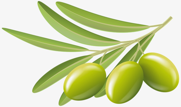 Olive clipart. Green olives branch png