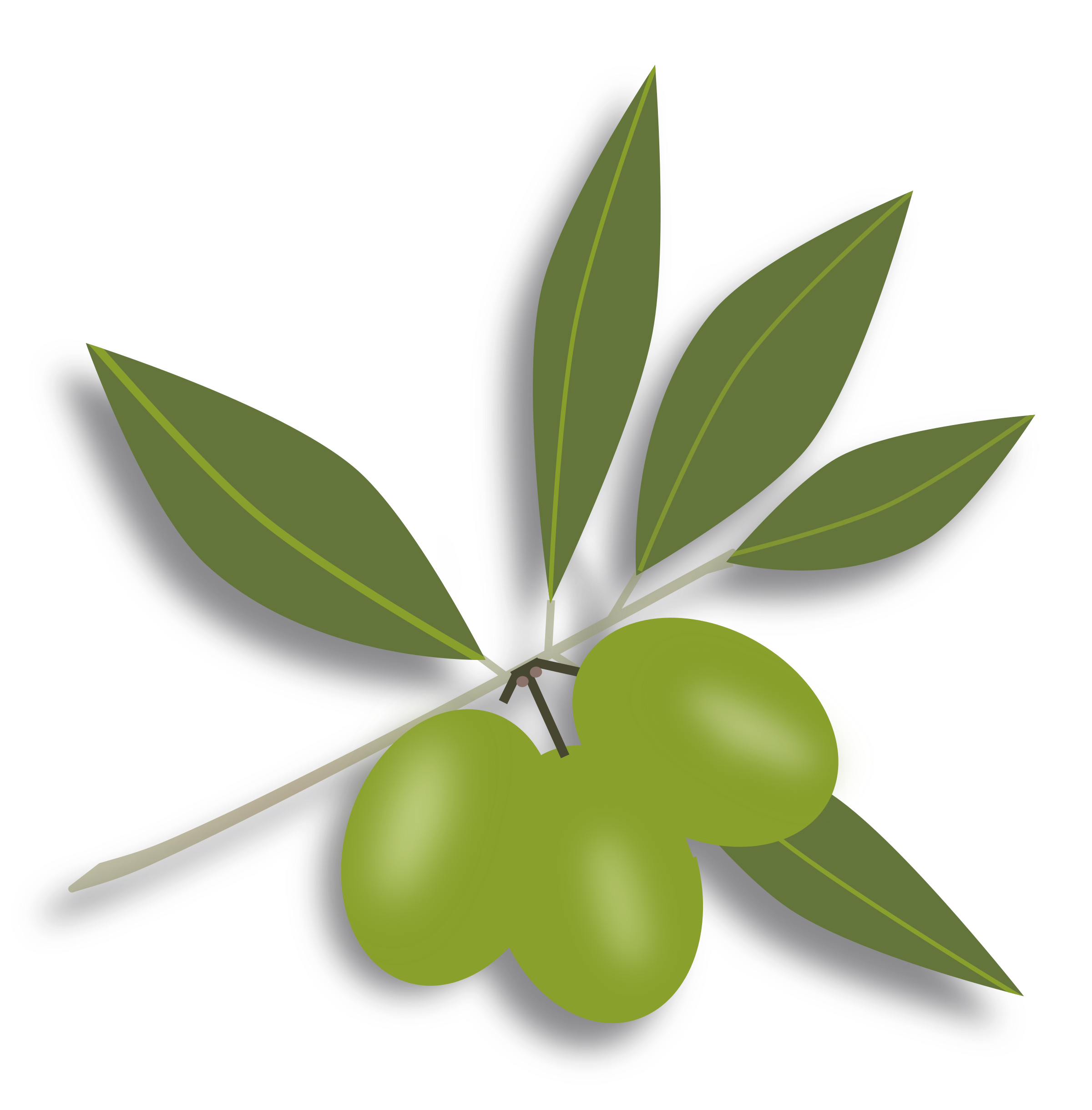 Olive clipart. Free olives cliparts download