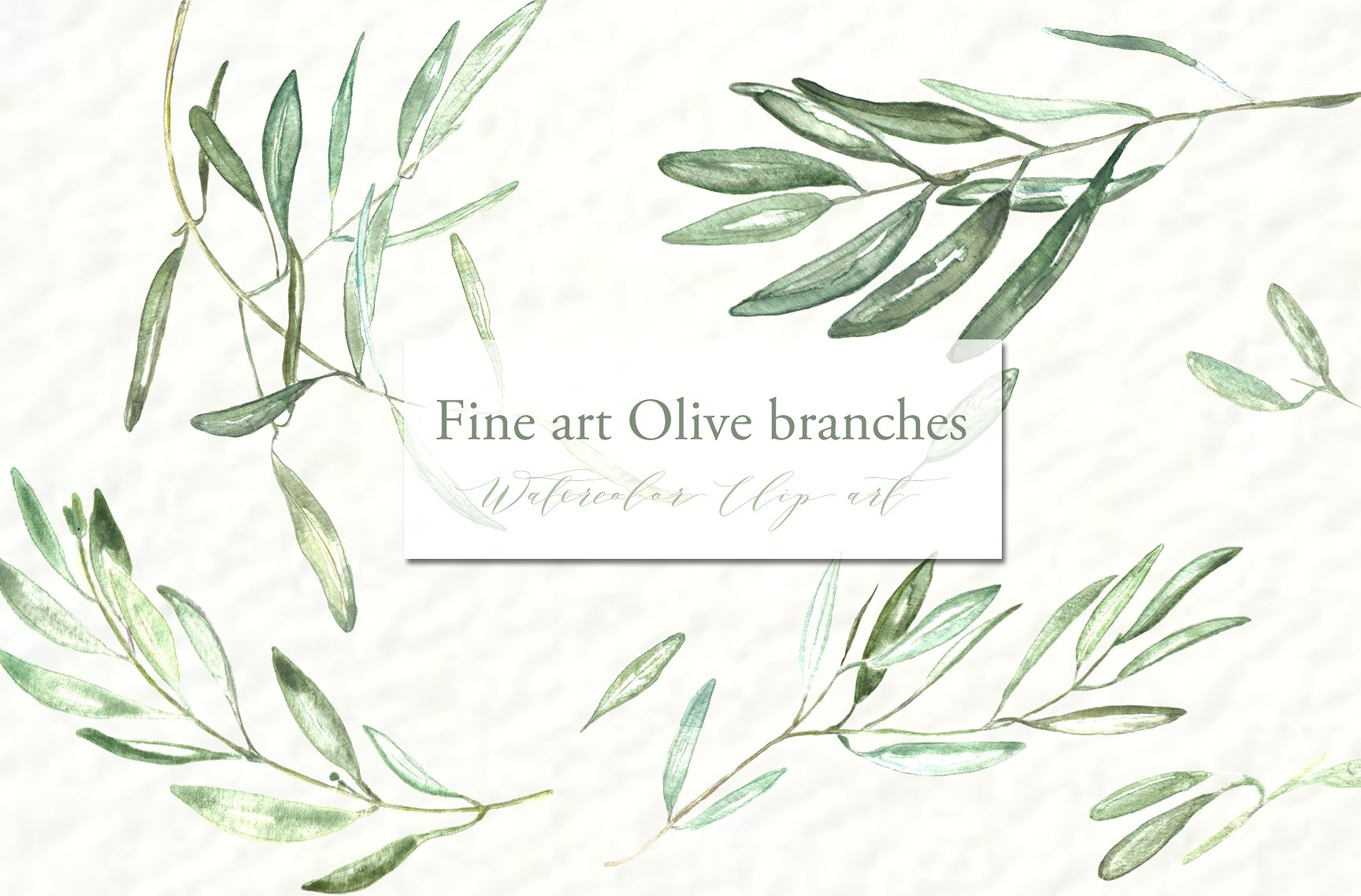 Olive clipart olive branch. Branches watercolor illustrations creative