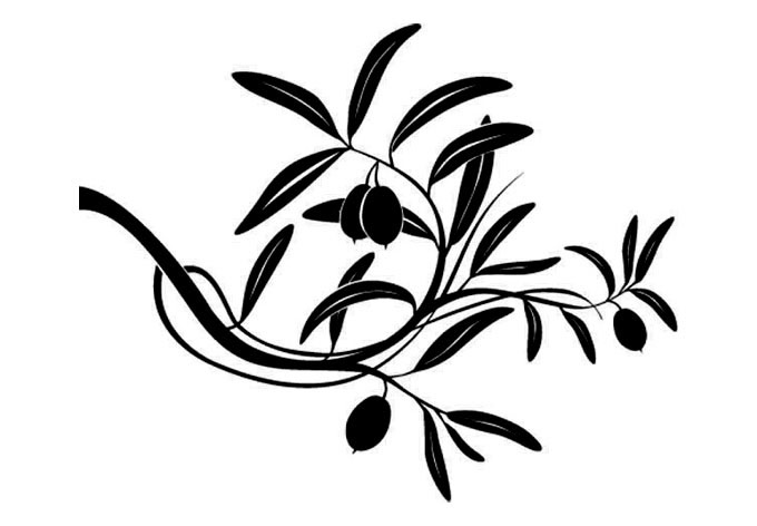 Olive clipart olive plant. Image of tree branch