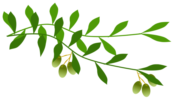 Olive clipart olive plant. Branch tree laurel wreath