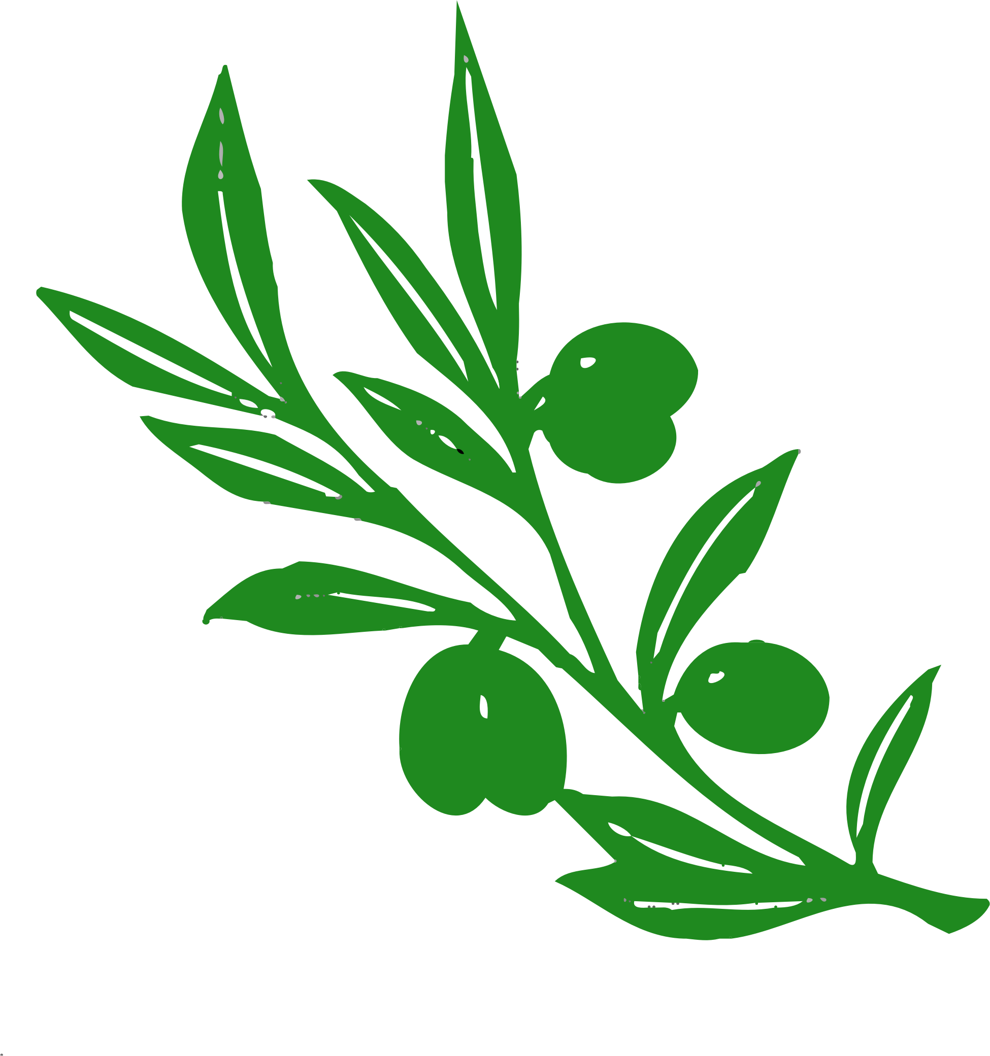 Olive clipart olive plant. Tree branch big image