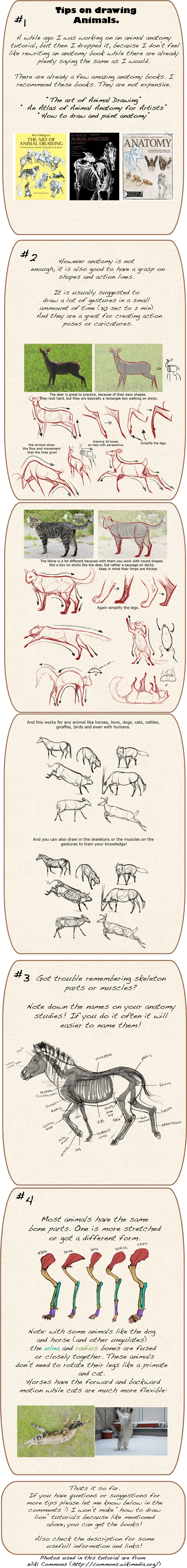 Hares Drawing Anatomy Transparent Png Clipart Free Download Ya