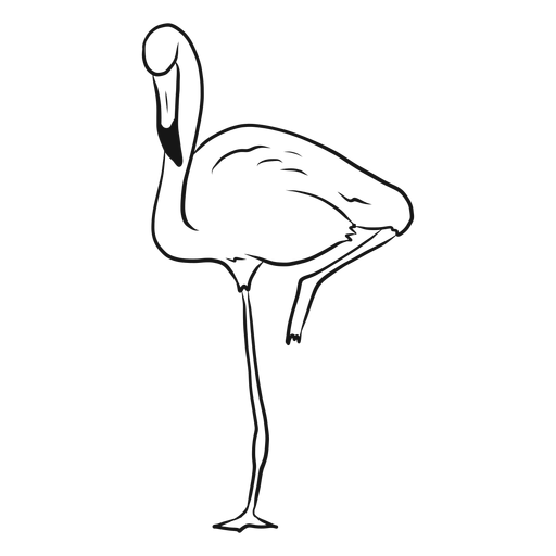 Drawing leg sketch. Flamingo standing on one