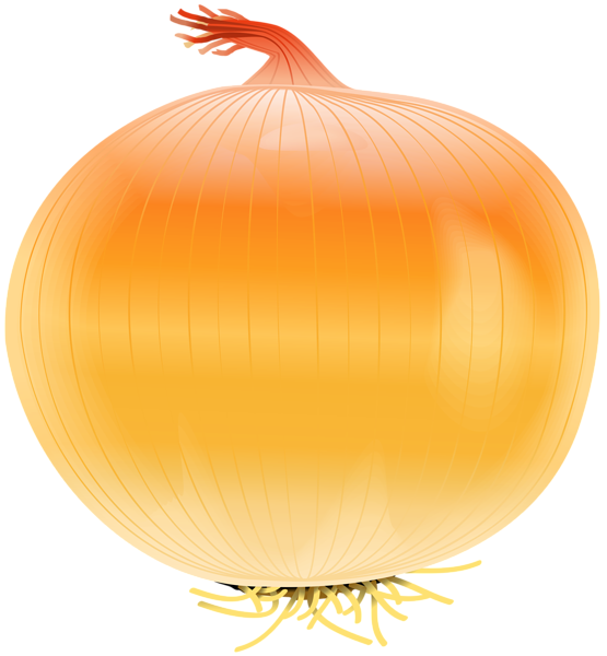 Onion clipart. Free png clip art