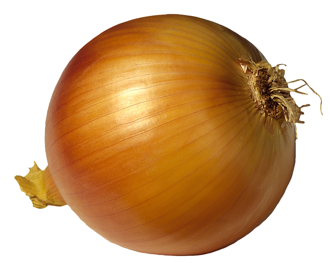 Onion clipart. Png picutre gallery yopriceville