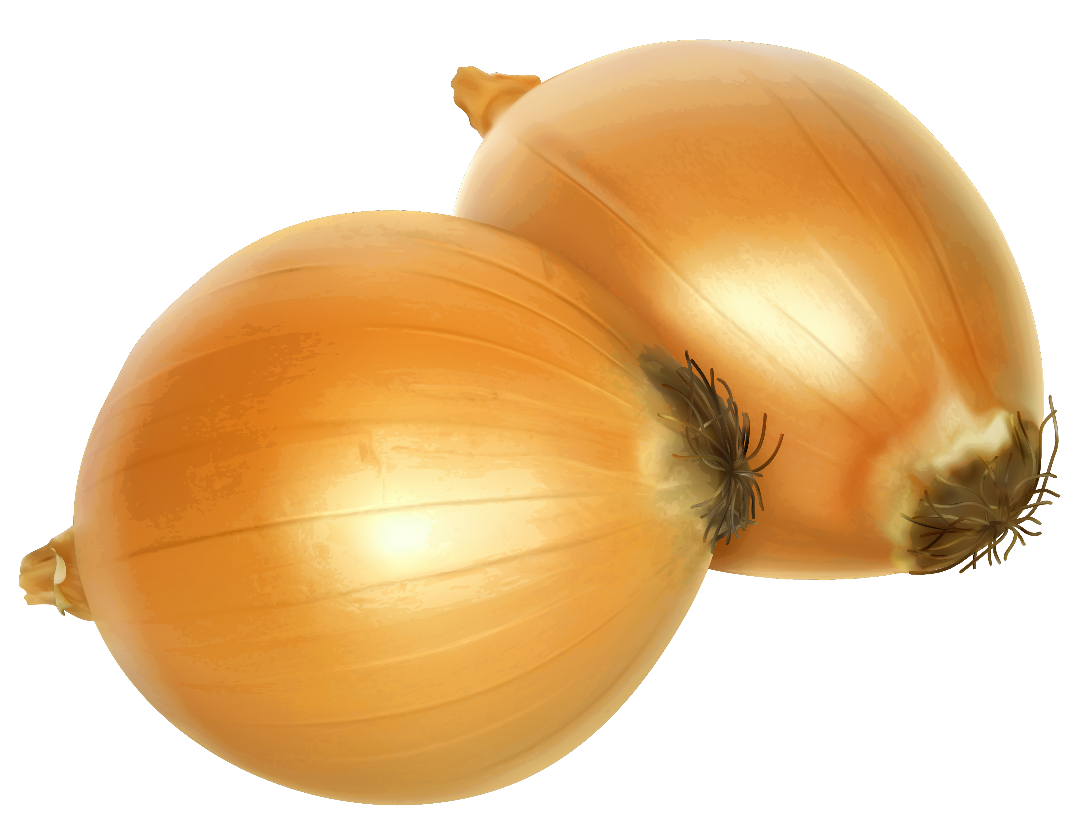 Onion clipart onoin. Png gallery yopriceville high