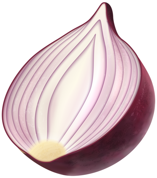 Onion clipart. Red png clip art