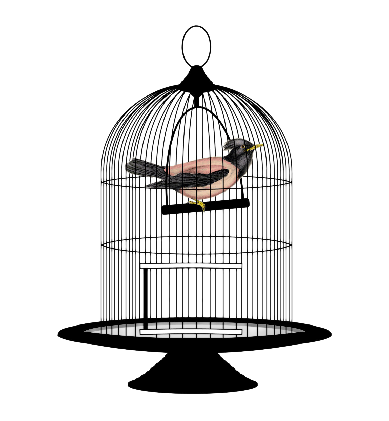 open bird cage png