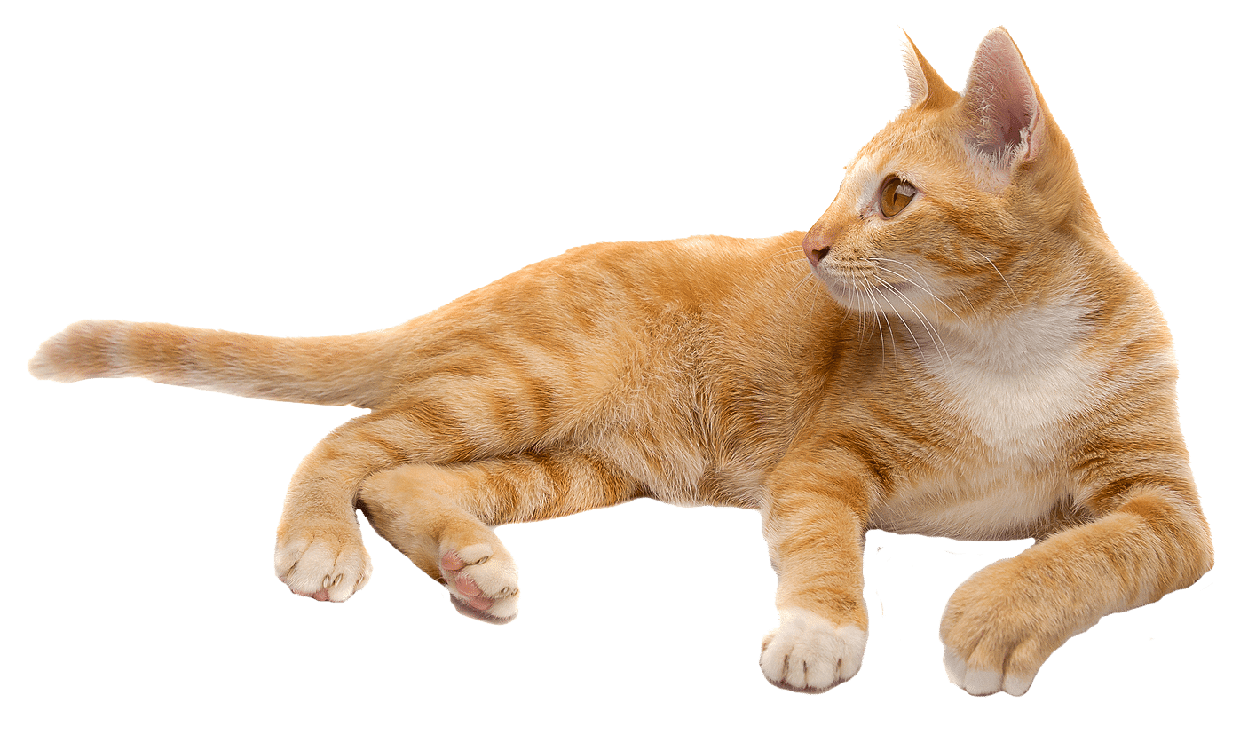 Cats free images download. Cat png graphic library