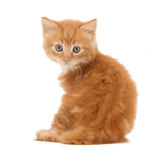 Kittens transparent cheap. Download cute png pics