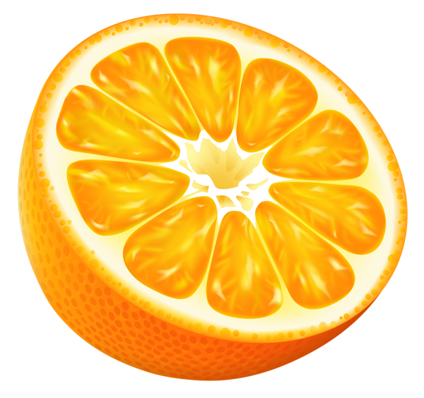 Vector fruits fruity. Oranges clip art