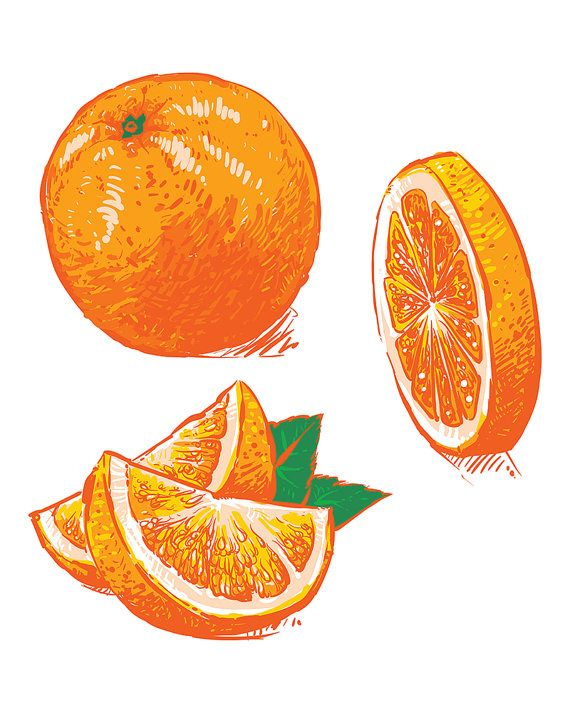 Oranges clipart hands. Vector collection of fresh