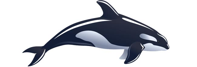 Orca clipart full body. Latest sightings whale time