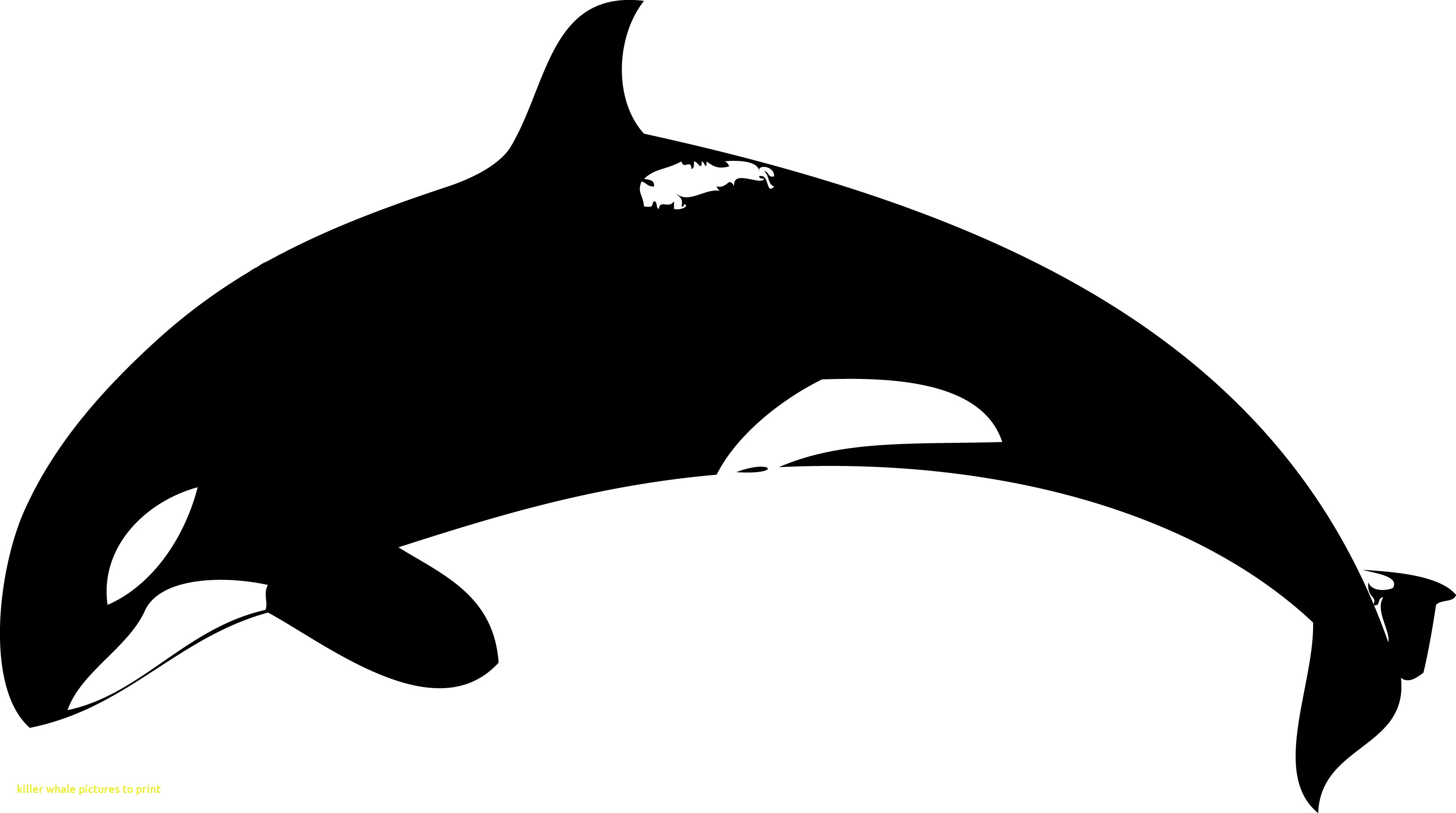 Orca clipart real whale. Emerging pictures to print