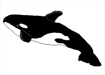 Orca clipart real whale. Free killer graphics images