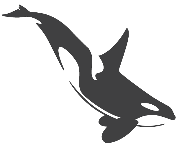Orca transparent. Image icon png animal