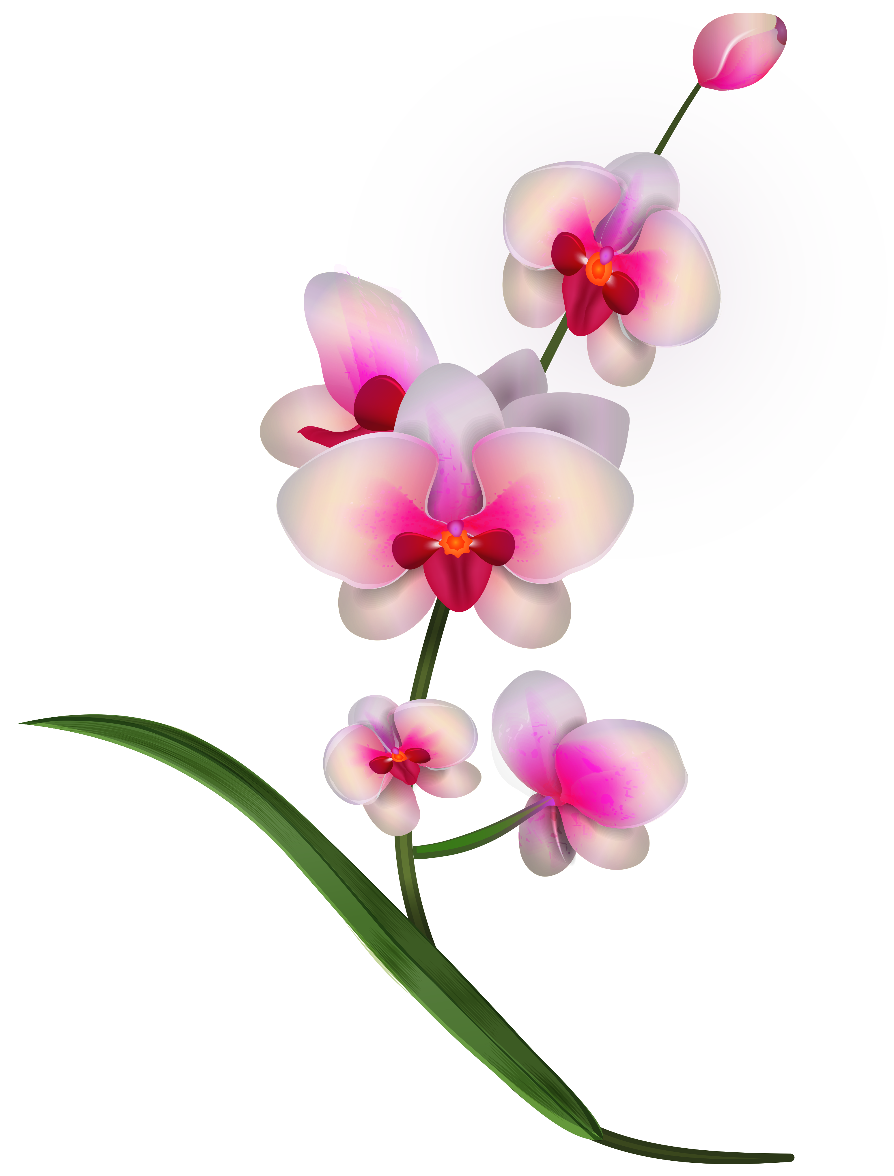 Orchid clipart orchid sketch. Free cliparts download clip