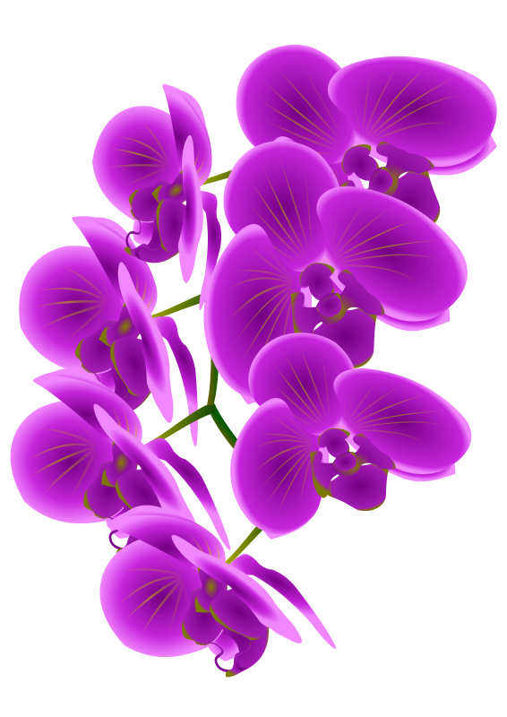 orchid transparent lilac