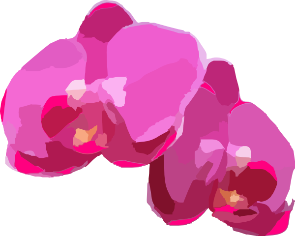 Orchid transparent animated. Flower clipart at getdrawings