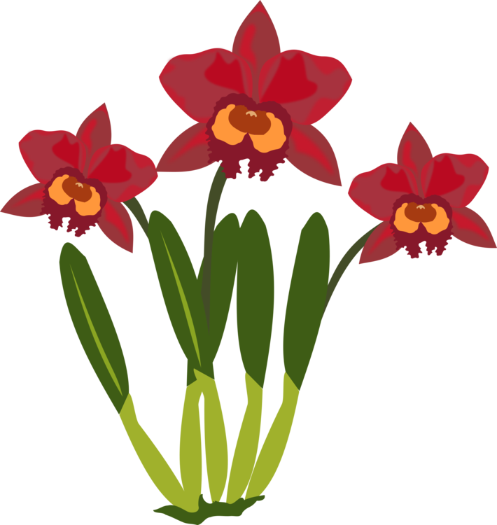 Plants clipart flower plant. Cattleya orchids flowering free