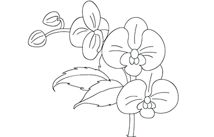 Orchid clipart coloring page. Line drawing at getdrawings