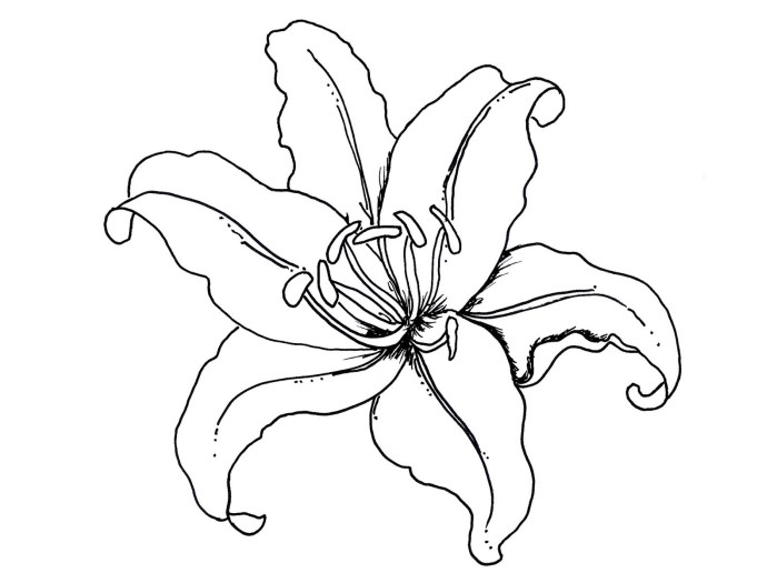 Orchid clipart coloring page. Flower pages lovely free