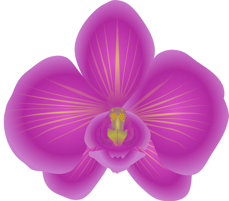 drawing orchid flower colombian