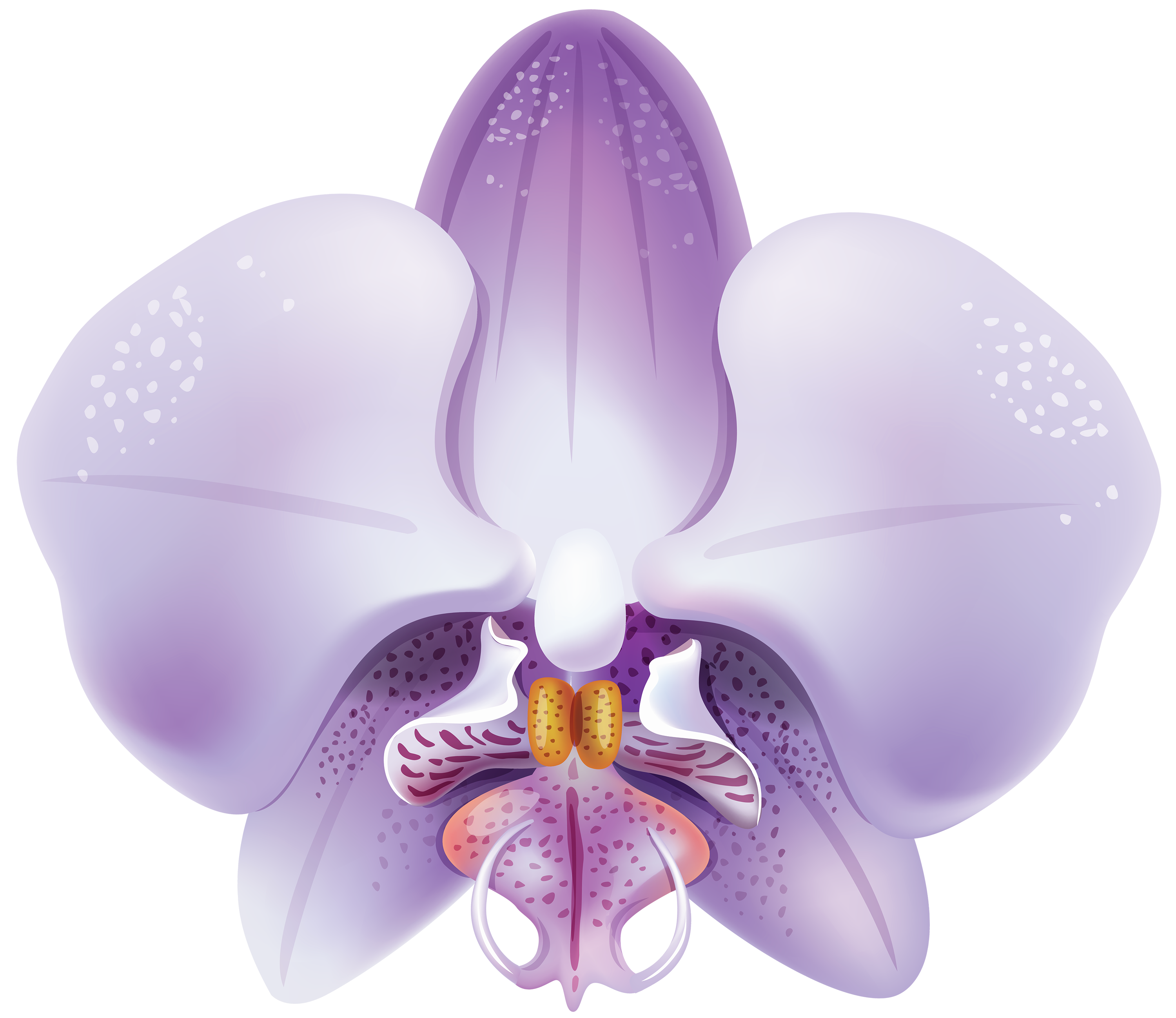 Orchid transparent high resolution. Violet png clipart best