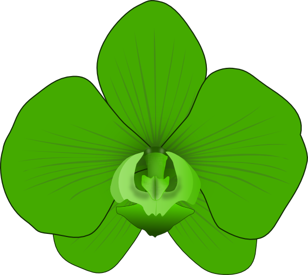 orchid clipart green orchid