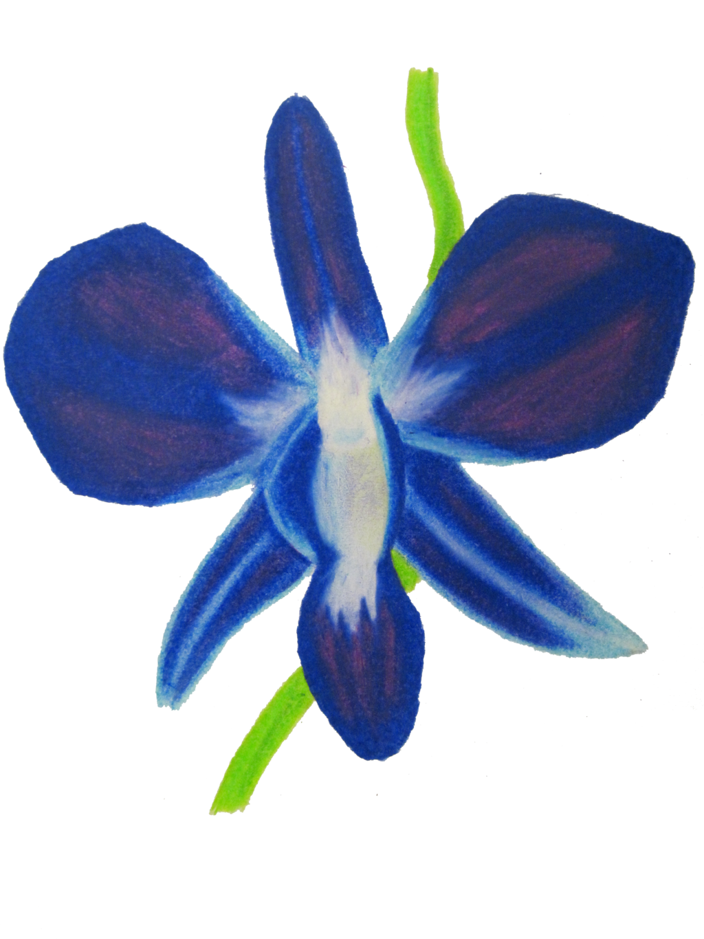 Drawing orchid watercolor. Eletragesi blue flower images