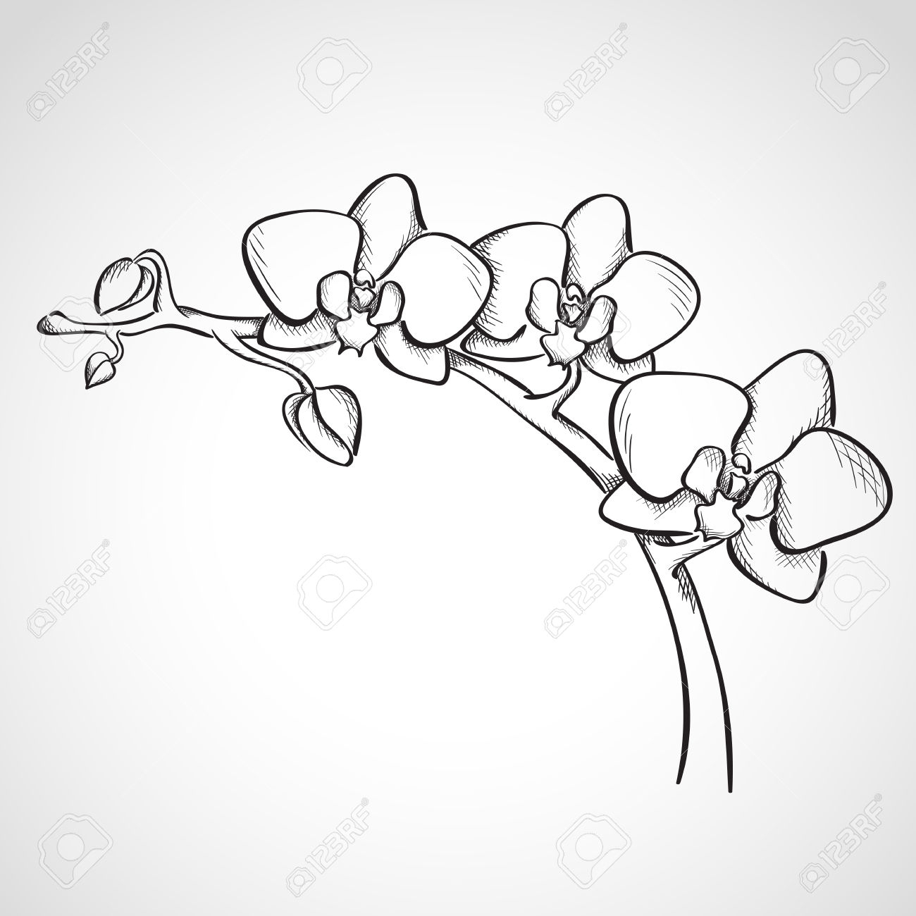 Orchid clipart orchid sketch. Flower pencil and in