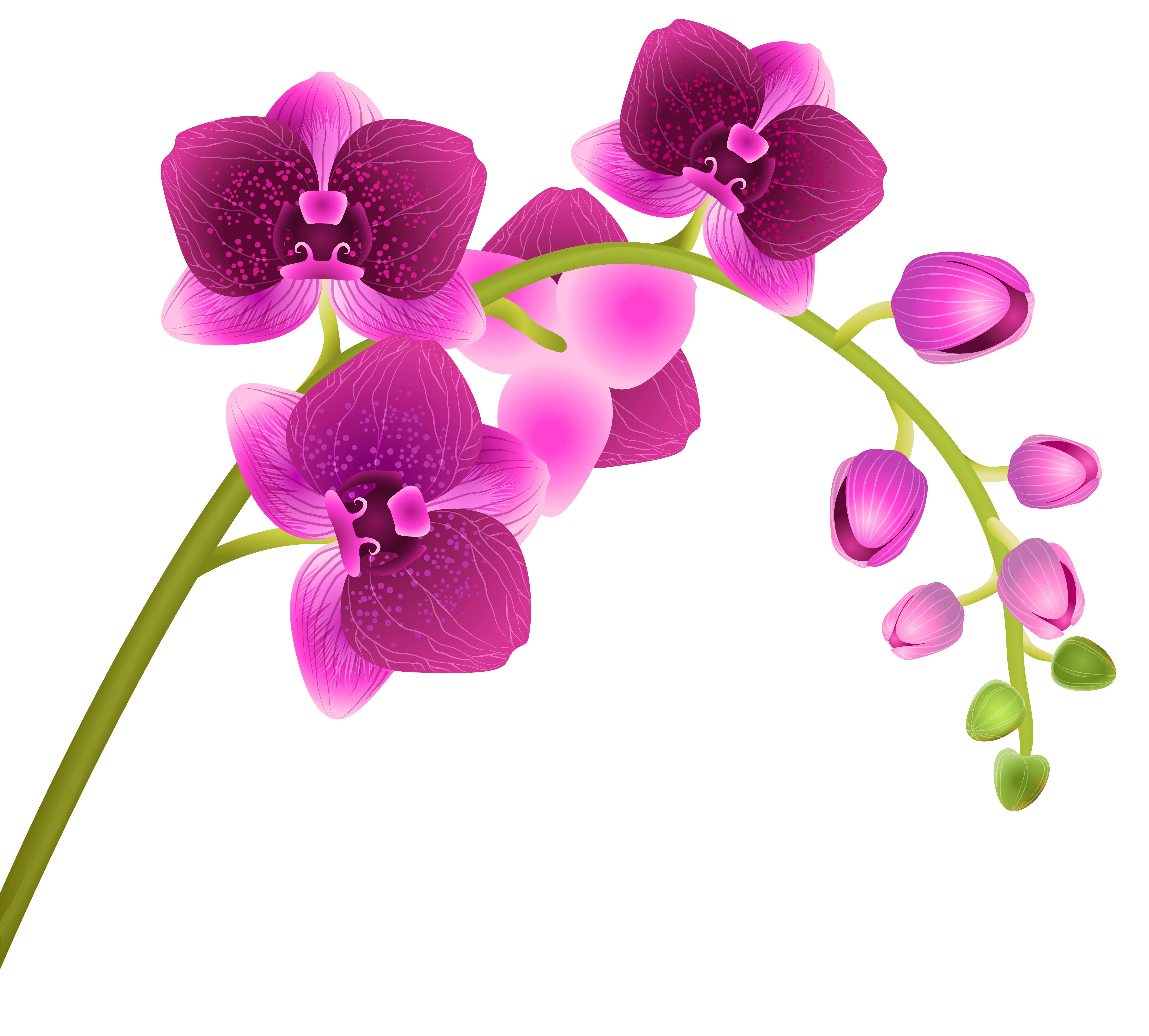 Flowers transparent png. Free orchid cliparts download