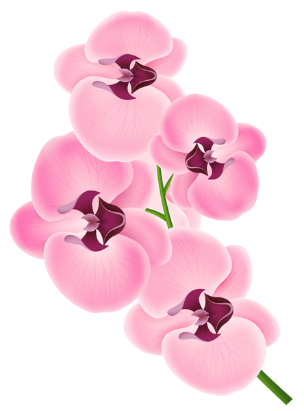 Daffodil vector yellow. Pink orchid png clipart