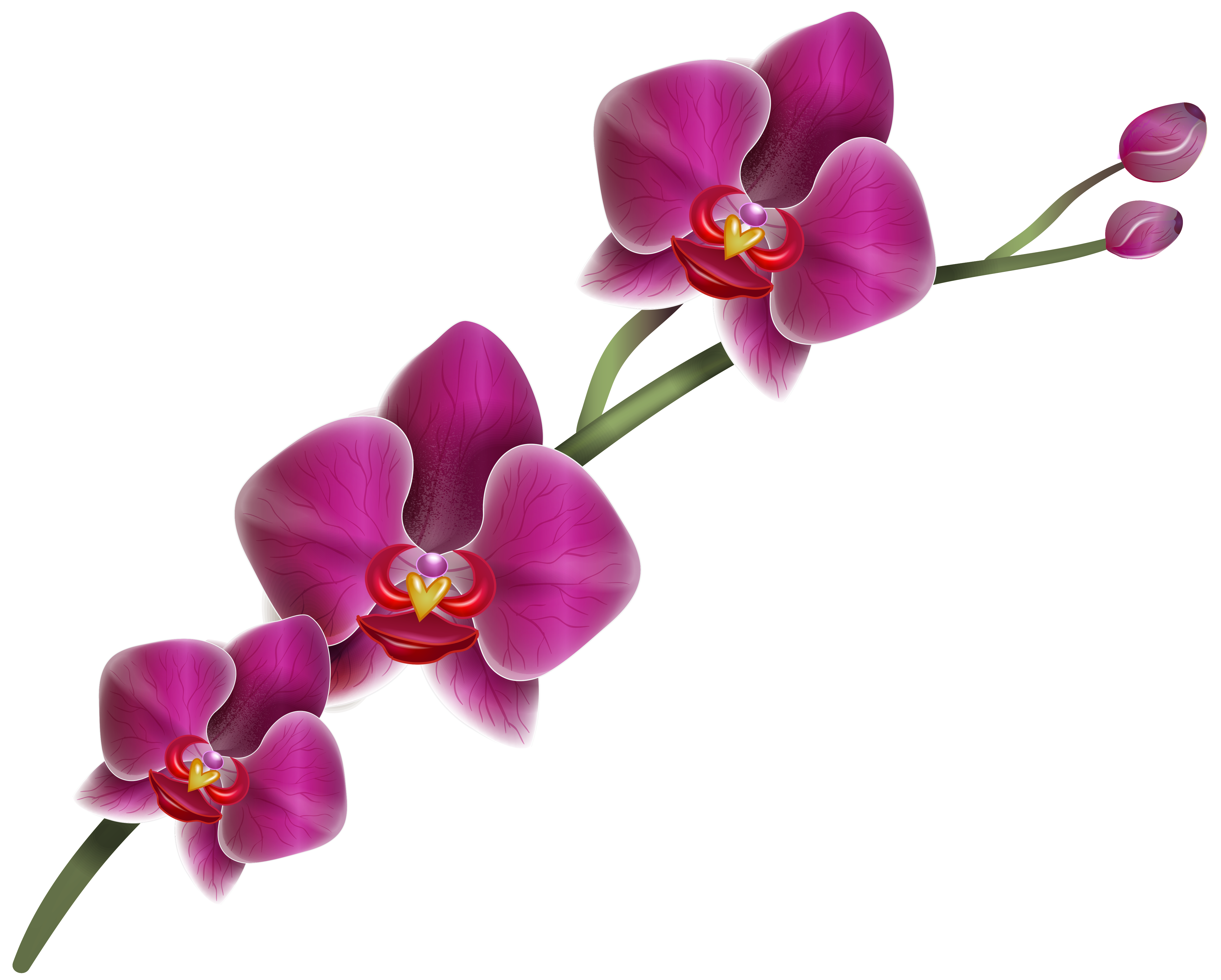 Orchid transparent lilac. Home clipart png fun