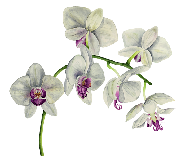 Orchid transparent watercolor. Painting carry all pouch