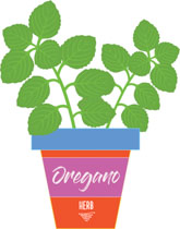 Oregano. Search results for clip