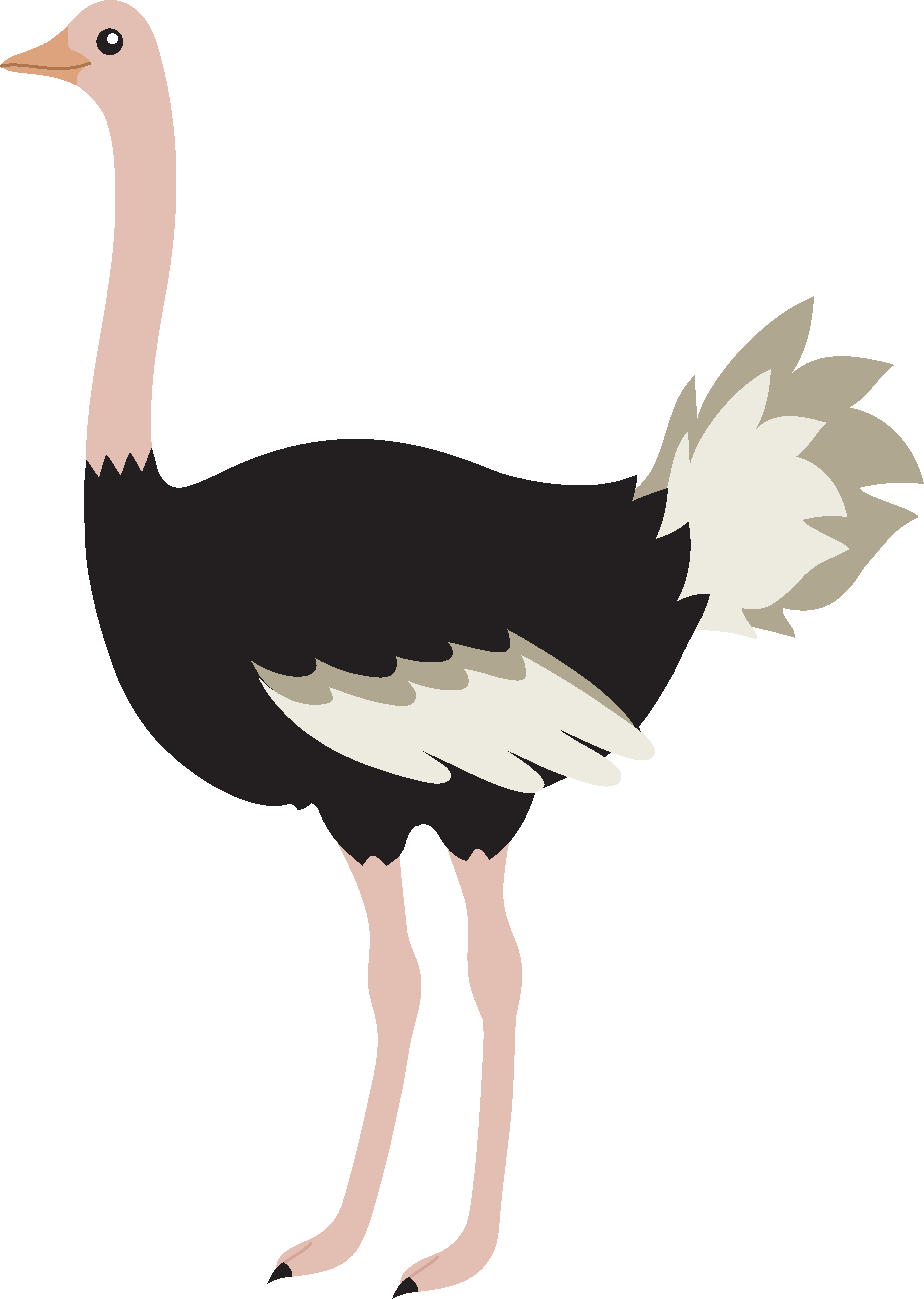 Ostrich clipart cute baby. Cartoon images pictures becuo