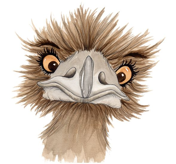 Ostrich clipart tall animal. Best and emu