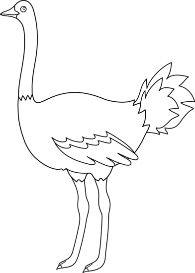 Ostrich clipart white background. Outline images gallery for