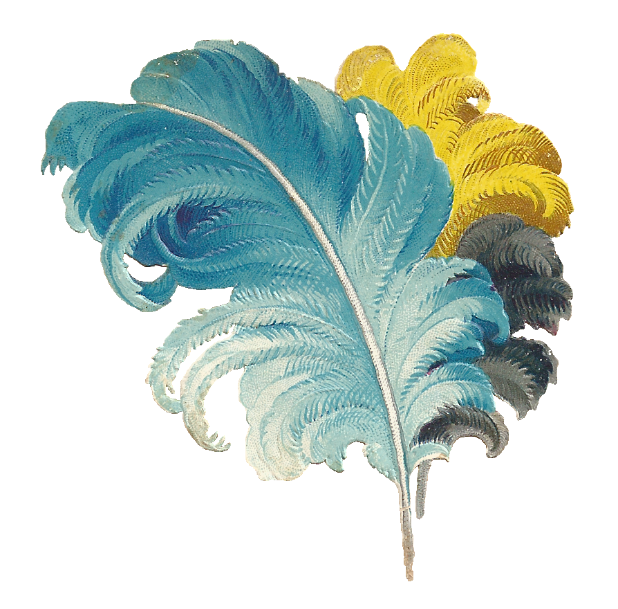 Ostrich feathers png. Image result for feather