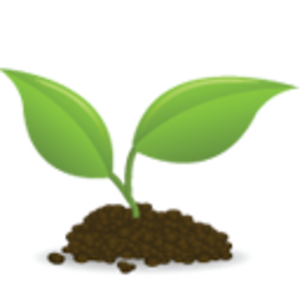 seedling clipart sunflower seedling