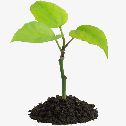 Other clipart seedling. With soil green seedlings